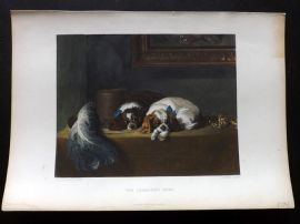 Landseer 1880 Hand Col Dog Print. The Cavalier's Pets. King Charles Spaniels